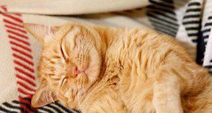 Crisi epilettica nel gatto