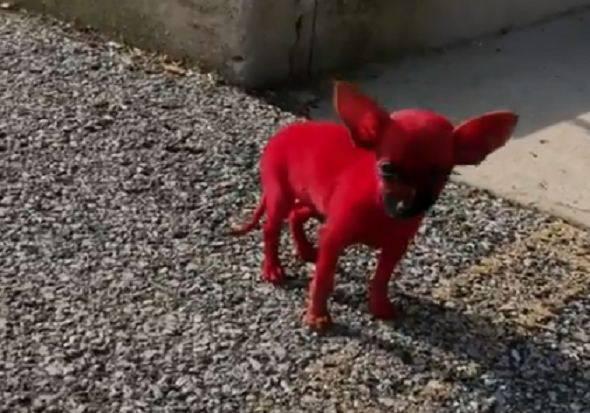 tintura per cani