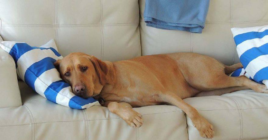 Crisi epilettiche del cane