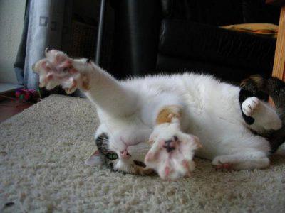 epilessia nel gatto