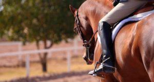 equitazione salute