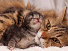 gatta e cuccioli