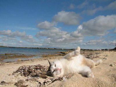 gatti al sole
