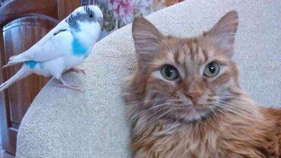 Gatti e uccelli