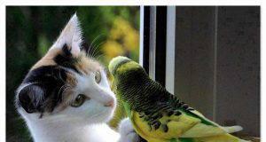 Gatti e uccellini