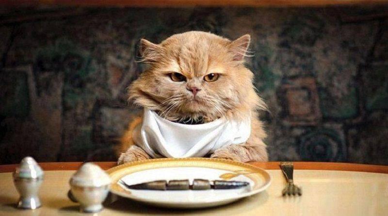 gatto anziano alimentazione