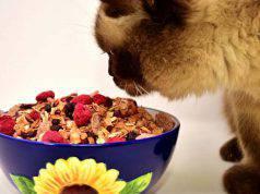 Gatto anziano: alimentazione