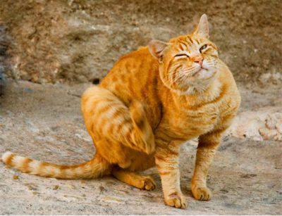 Insetti e gatti