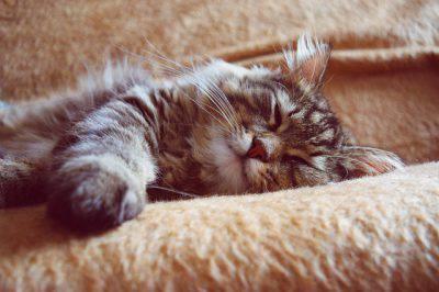 gatto con crisi epilettica