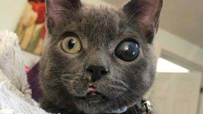 occhio con glaucoma