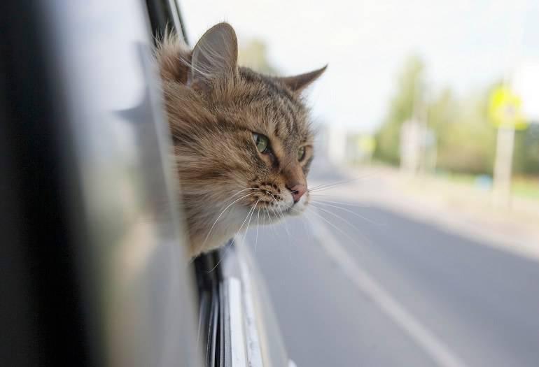 Micio in auto