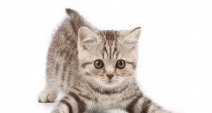Sos gatti