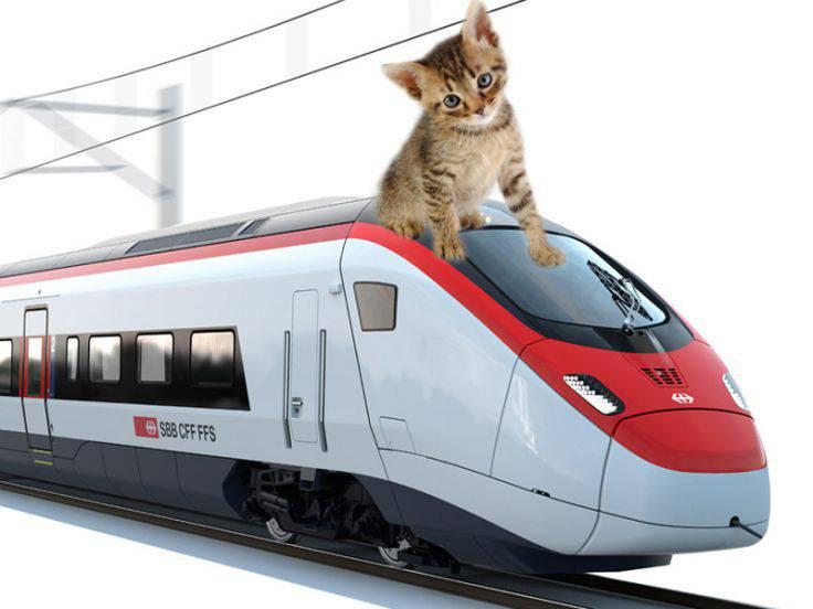 Gatto sul treno