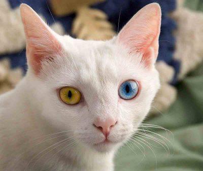 Gatto con sguardo fisso per paura