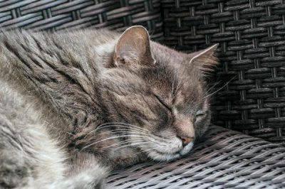Gatto anziano riposo
