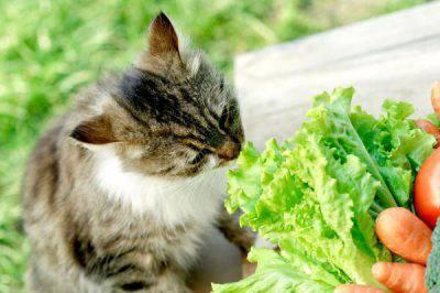 gatti: cibo estivo