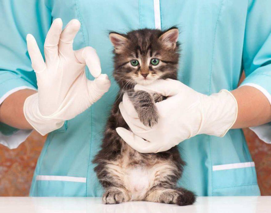 Gatto anziano: prevenzione