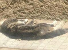 gatto ucciso bidello