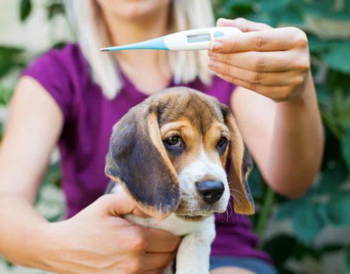 misurare la febbre al cane