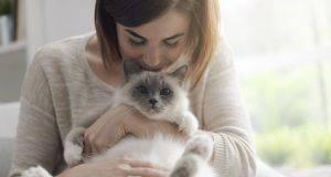 come rendere un gatto più affettuoso