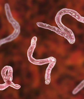 parassiti intestinali cane