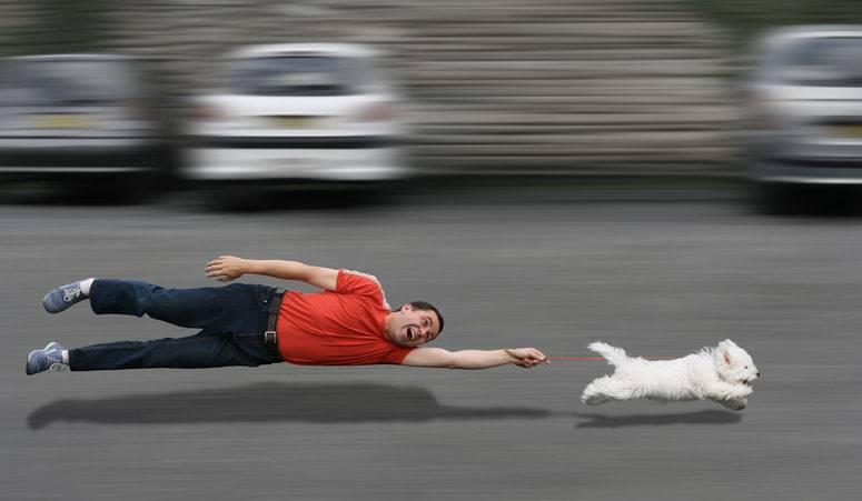 cane insegue auto