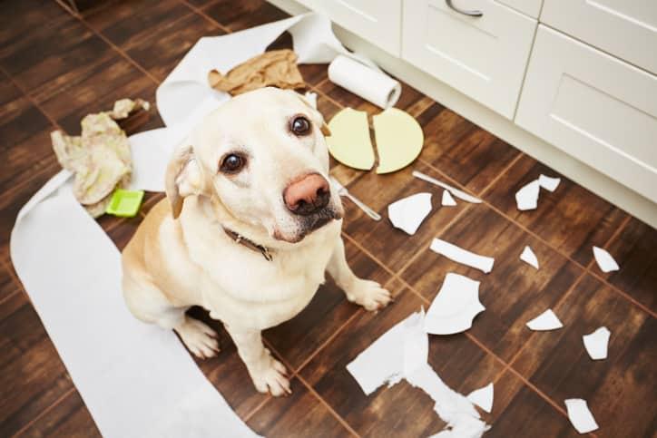 cane non obbedisce