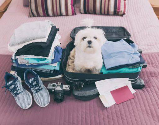 vacanze dove lasciare cane o gatto
