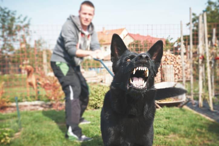 cane aggressivo cosa fare