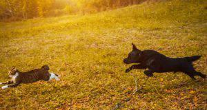 cane rincorre gatto