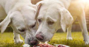 cosa far mangiare al cane quando fa caldo