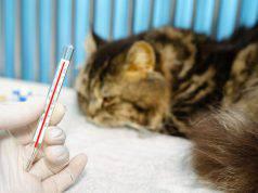 come misurare la febbre al gatto