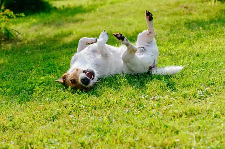 forasacco cane rimedi sintomi