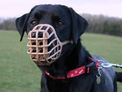 Museruola al cane