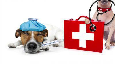 Cane da curare
