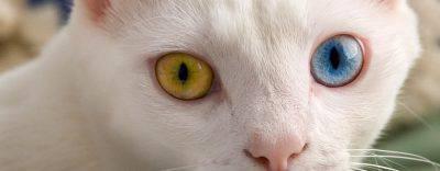 occhio con uveite