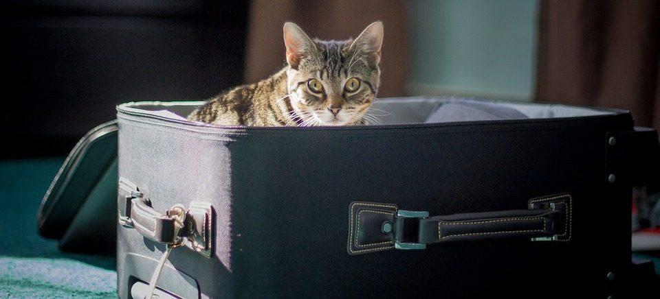 Micio in valigia