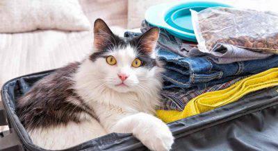 Viaggiare col il tuo gatto