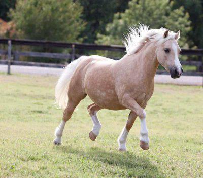 pony sportivi
