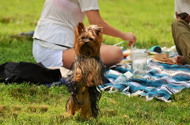 picnic con il cane