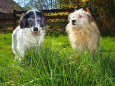 livorno cani avvelenati