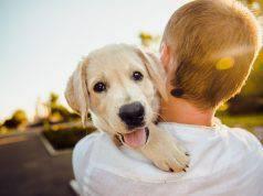 amore per gli animali