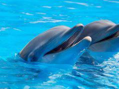 delfino significato