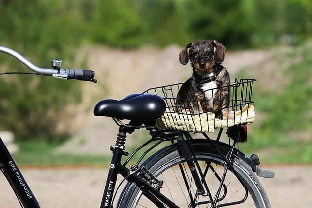 cane in bicicletta