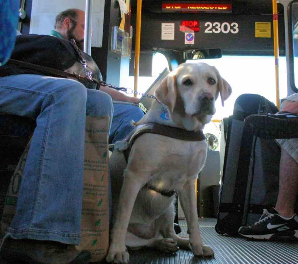 Trasporti pubblici cani e gatti
