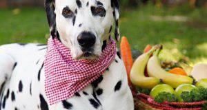 Frutta e verdura al cane