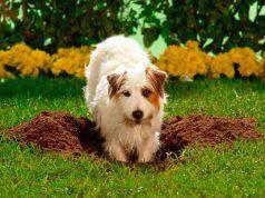 Cane nasconde cibo