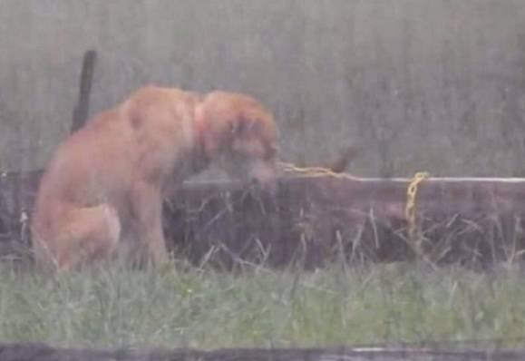 maltrattamento cane