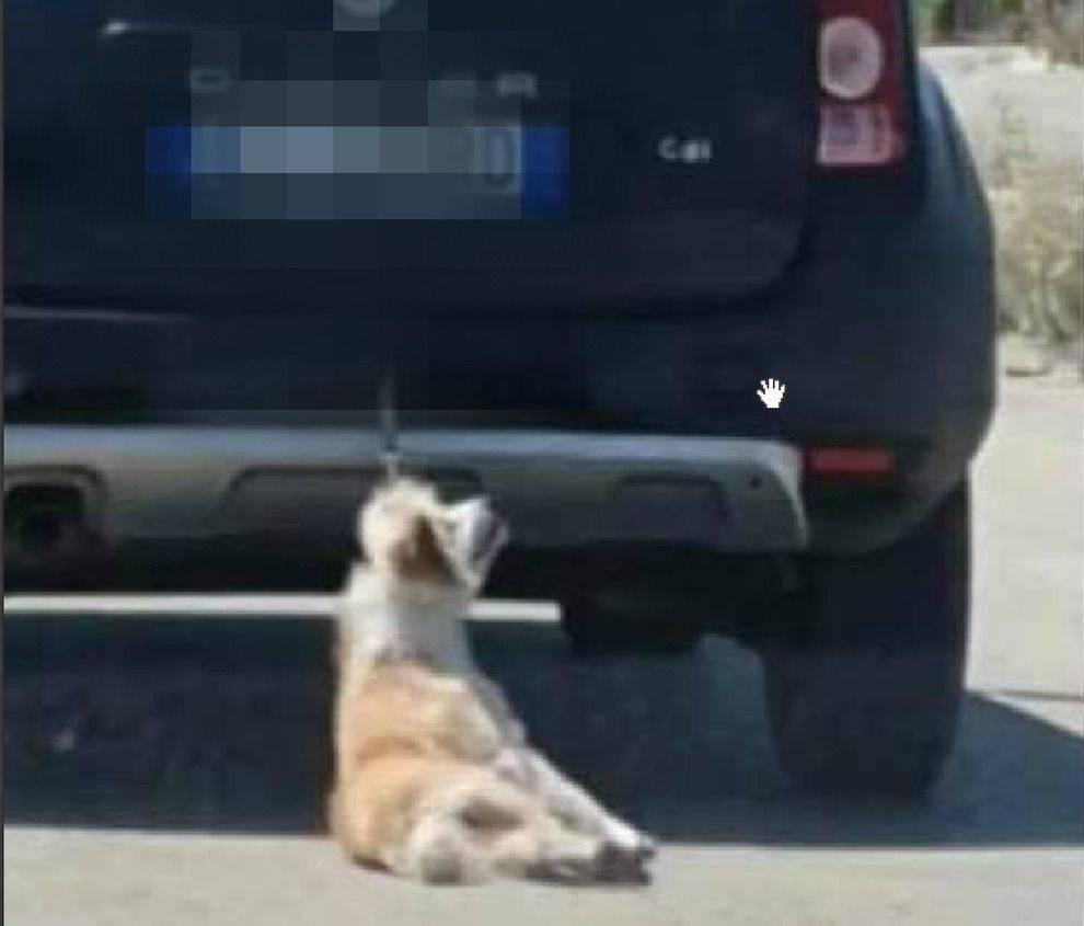 cane trascinato auto