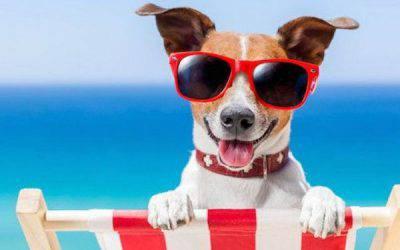 Cani in spiaggia: diritti e dover